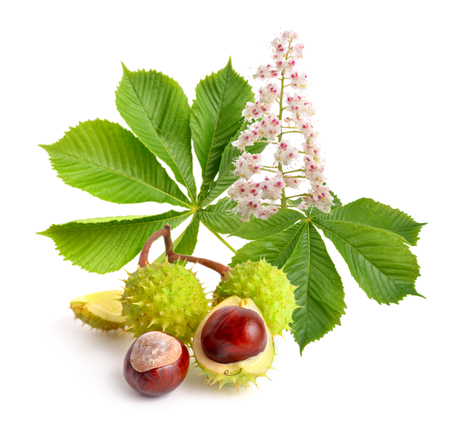 Horse-chestnut (Aesculus) fruits with leawes and flower. Isolated on white background