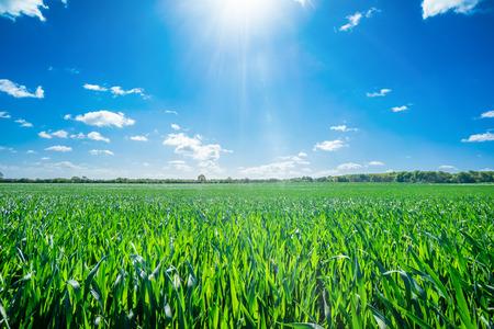 Photo pour Countryside landscape with sunny weather - image libre de droit