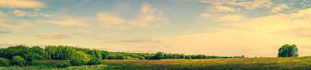 Panorama landscape of a prairie with green trees
