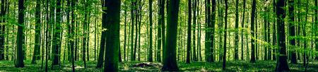 Foto de Idyllic forest in a springtime panorama landscape - Imagen libre de derechos
