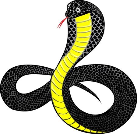 Vector illustration snake