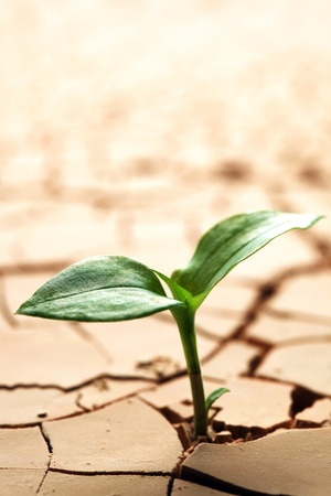 Photo pour Plant in dried cracked mud - image libre de droit