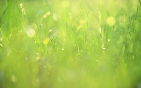 Grass covered in dew background