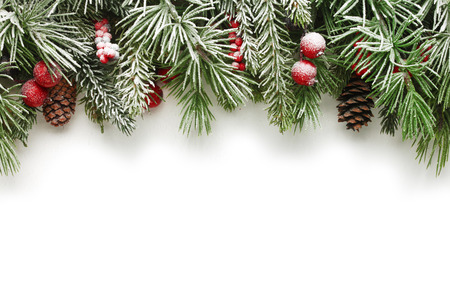 Snow covered Christmas tree branches background