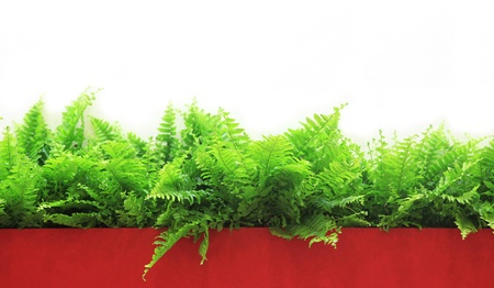 A number of plants of a fern on a red support on a white background