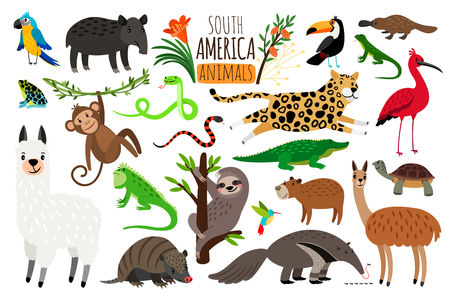 Illustration pour South America animals. Vector cartoon guanaco and iguana, anteater and ocelot, tapir and armadillo on white - image libre de droit