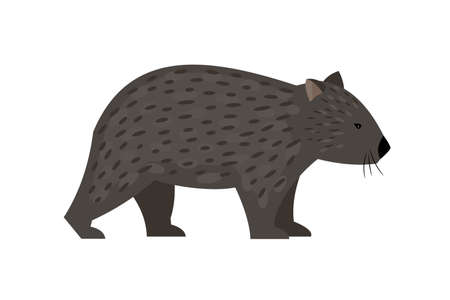 Illustration pour Exotic australian animal. Cartoon cute character of wildlife, friendly beast of nature, vector illustration of wombat isolated on white background - image libre de droit