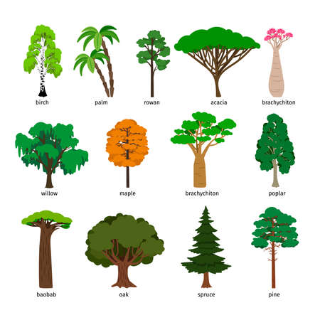 Illustration pour Vector trees. Forest tree set with titles, birch and oak, pine and baobab, acacia and spruce vector - image libre de droit