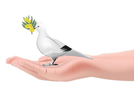 Illustration pour palm dove and flower mimosa twig - image libre de droit