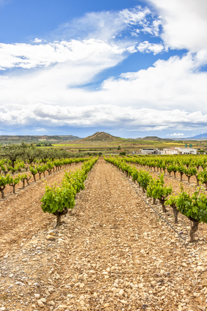 Photo for Scenic overcast agricultural landscape with vineyards in the foreground in La Rioja, Spain near Logrono - Royalty Free Image