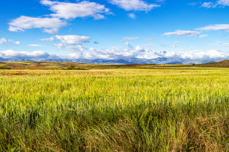 Photo for Beautiful May agricultural landscape on the Camino de Santiago, Way of St. James between Najera and Azofra in La Rioja, Spain - Royalty Free Image