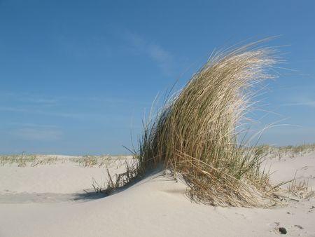 Dune grass on a sandy beach under a blue sky