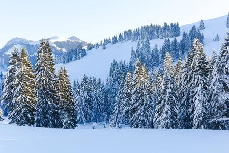 Snowy Alpine Trees V