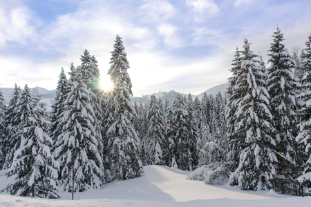 Snowy Alpine Trees XI