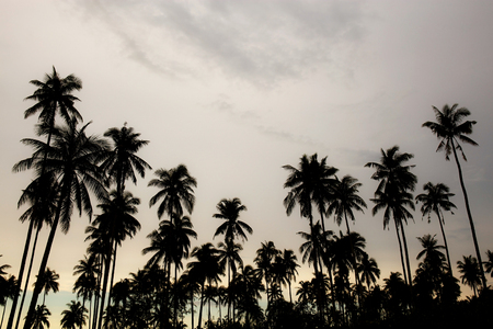 Photo pour Coconut tree at sky with the silhouette in summer. - image libre de droit