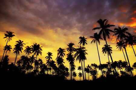 Photo pour Silhouette of palm tree at sunset on beach with colorful sky. - image libre de droit