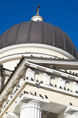 pigeons sitting on church ruf and flying around