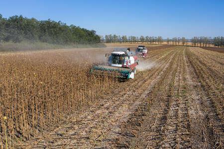 Foto für Harvesting of sunflower seeds, aerial view - Lizenzfreies Bild