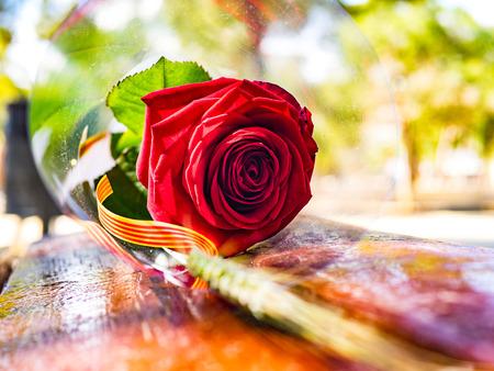 A rose seen in Sant Jordi day in Barcelona, Spain