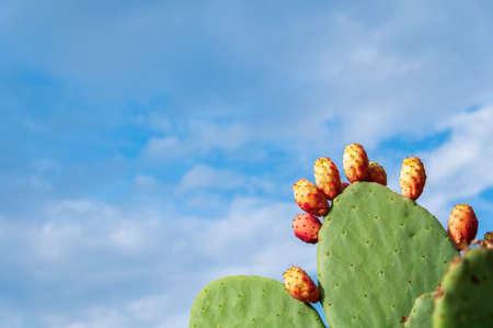 Foto für Prickly pear cactus with fruit - Lizenzfreies Bild
