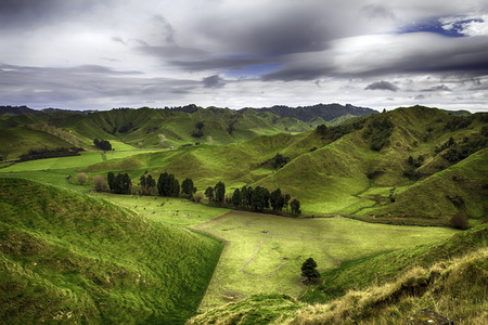 New Zealand - Landscape from the Forgotten World Highway