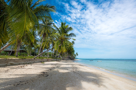 Photo for Coconut trees stretch into the sea - Royalty Free Image