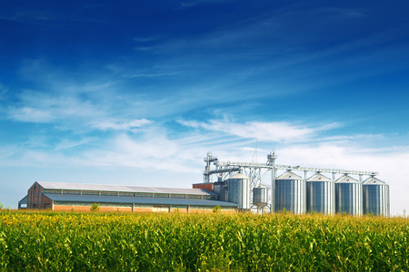 Photo for Grain Silos in Corn Field. Set of storage tanks cultivated agricultural crops processing plant. - Royalty Free Image