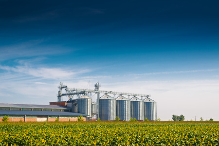 Photo for Grain Silos in Sunflower Field. Set of storage tanks cultivated agricultural crops processing plant. - Royalty Free Image