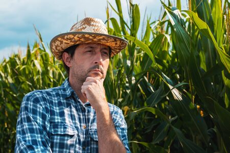 Responsible corn farmer in field thinking with hand on chin after checking up on maize crop development