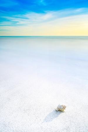 Ocean seascape  Sea mollusk shell in a white sandy beach under blue sky