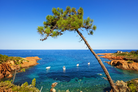 Esterel mediterranean tree, red rocks coast, beach and sea. French Riviera in Cote d Azur near Cannes, Provence, France, Europe.