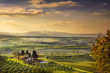Tuscany Maremma foggy morning, farmland and green fields country landscape. Italy, Europe.