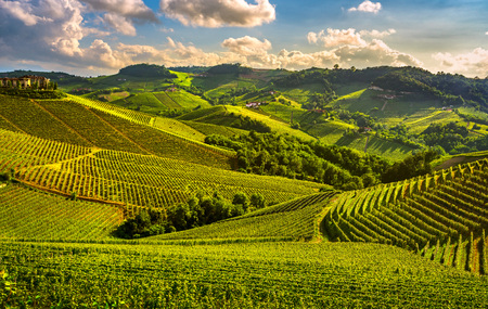 Photo for Langhe vineyards sunset panorama, Serralunga d Alba, Piedmont, Northern Italy Europe. - Royalty Free Image