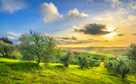Photo pour Maremma countryside panoramic view, olive trees, rolling hills and green fields on sunset. Sea on the horizon. Casale Marittimo, Pisa, Tuscany Italy Europe. - image libre de droit