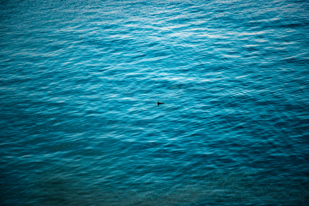 A single duck floats alone in the Pacific Ocean.