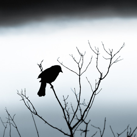 Silhouette of bird on branch, cloudy day