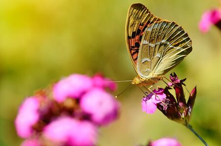 Butterfly resting on a wildflower