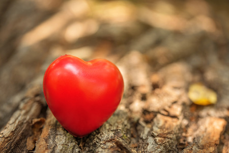 Love symbol on the tree trunk. Red heart