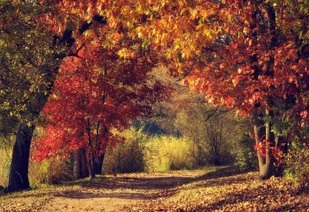 Dirt road in the colorful forest in autumn