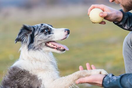 Photo pour Dog training in the park. Training with a ball. - image libre de droit