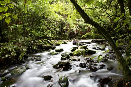 Stream flowing in lush tropical forest