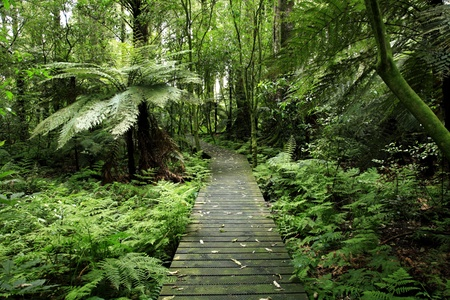 Footpath in tropical forest