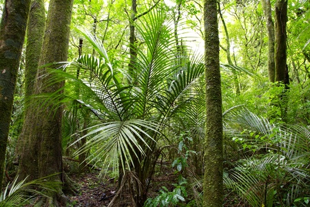 Lush foliage in tropical jungle