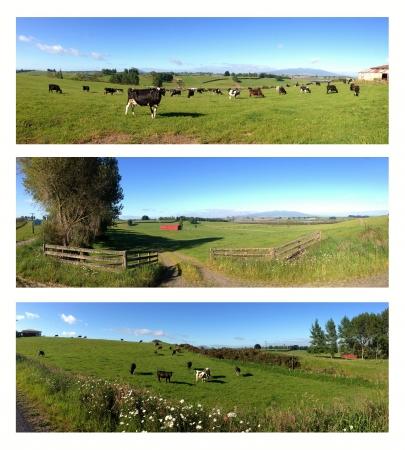 Rural scenes, North Island, New Zealand