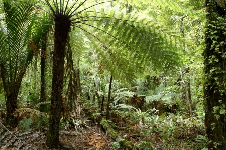 Fern Tree In Jungle