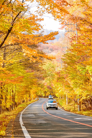 Foto per Scene of cars drive along the road with autumn red leaf in Aomori, Japan. Beautiful country side along the road great time for travel. - Immagine Royalty Free