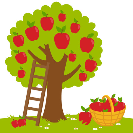 An apple tree, a ladder and a basket with harvested apples.