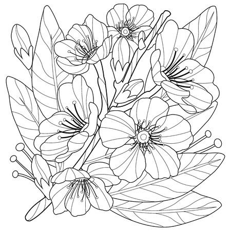 Ilustración de Blossoming almond tree branch with flowers. Coloring book page - Imagen libre de derechos