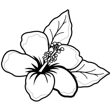 Illustration for Hawaiian hibiscus flower. Black and white coloring book page - Royalty Free Image