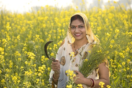 Photo pour Rural Indian woman harvesting rapeseed in field - image libre de droit